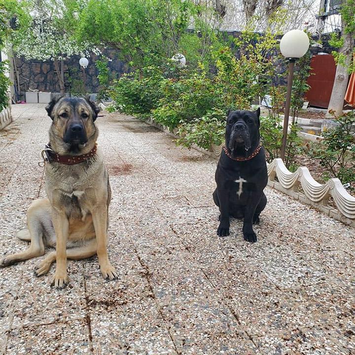 نخ نگار - تابلو نخ و میخ سگ های نگهبان